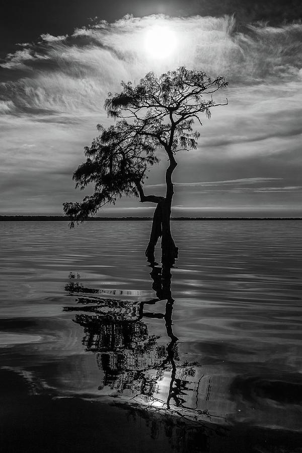 Cypress Reflections by Stefan Mazzola