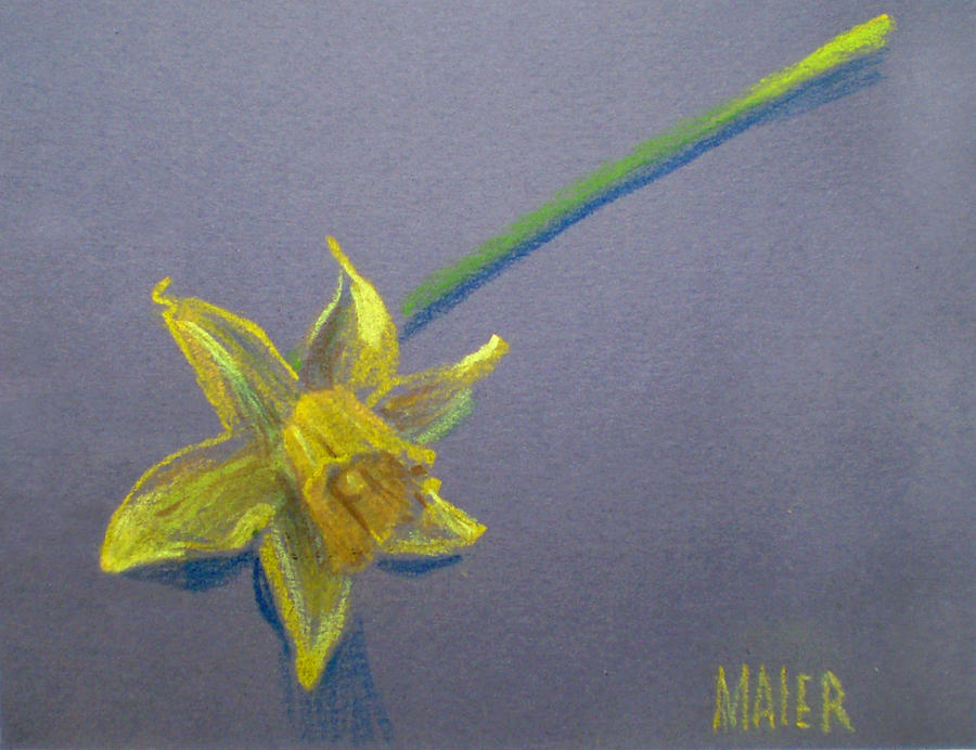 Daffodil Drawing - Daffodil by Donald Maier
