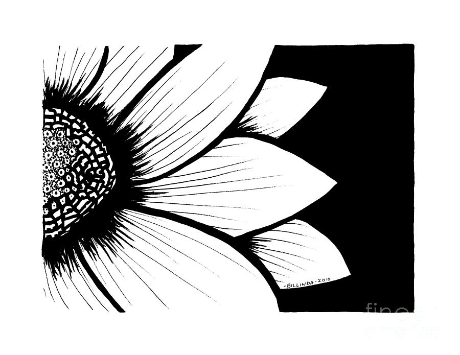 Black And White Drawing - Daisy by Billinda Brandli DeVillez