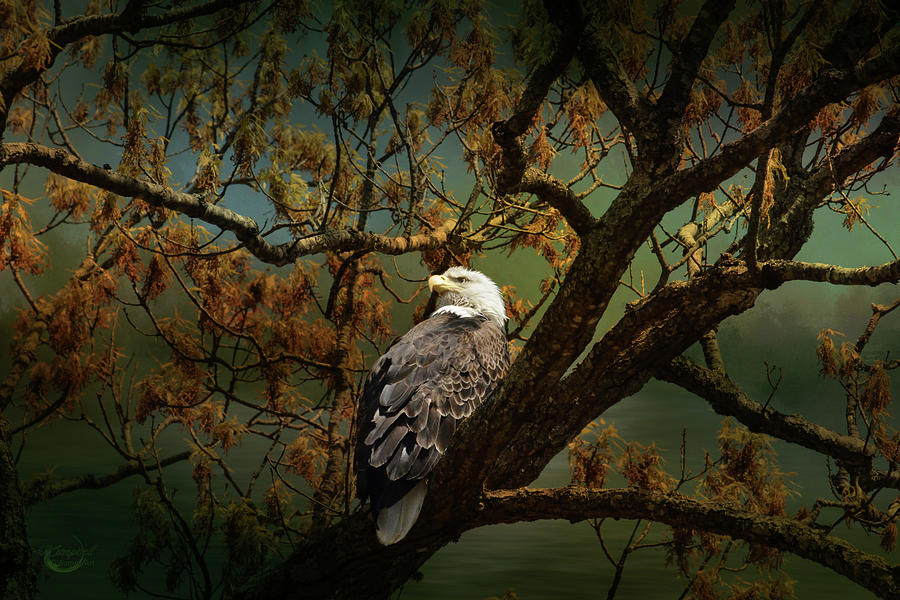 Eagle Photograph - Dawns Early Light by Theresa Campbell