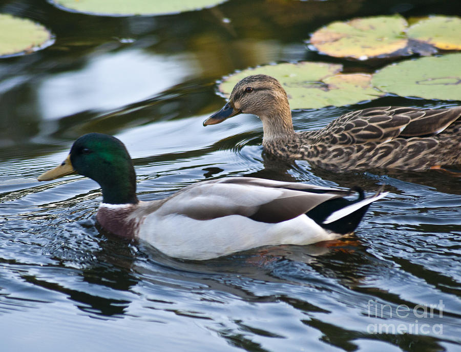 Nature Photograph - Day On The Pond by Alex Garcia