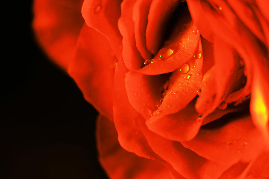 Flower Photograph - Delicate Beauty by Jeff Swan