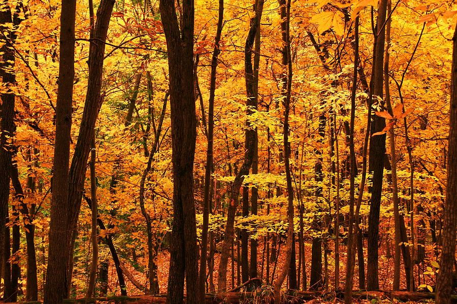 Autumn Photograph - Delicious Autumn by Mitch Cat