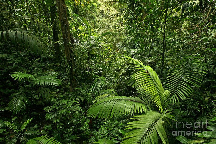 Rain Forest Photograph - Dense Tropical Rain Forest by Matt Tilghman