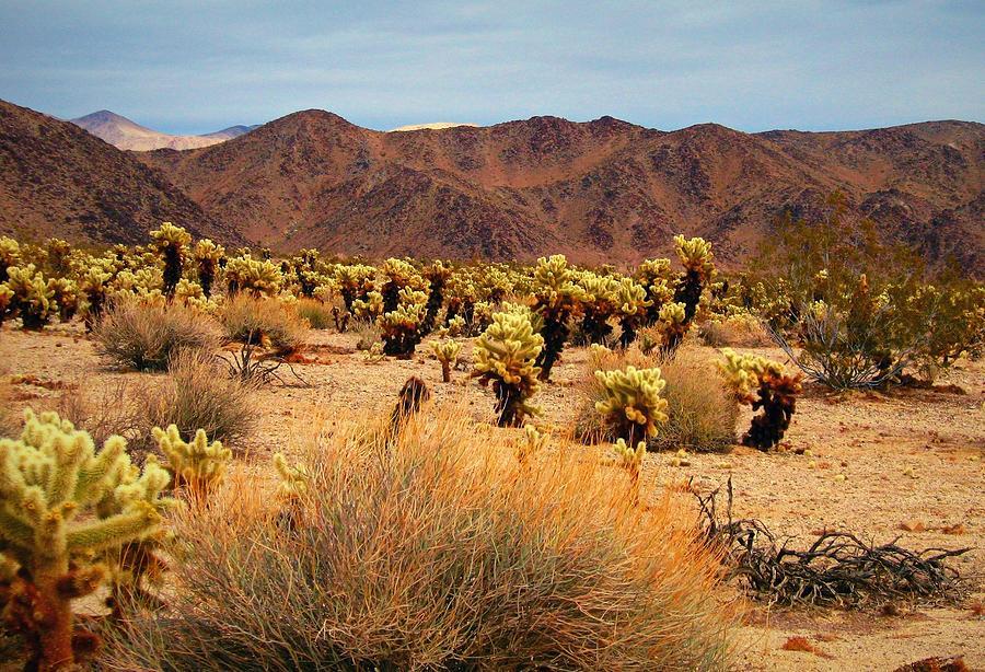 Desert Beauty by Max DeBeeson