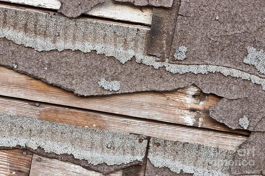 Asbestos Shingles Photograph - Deteriorating Asbestos Shingles by Inga Spence