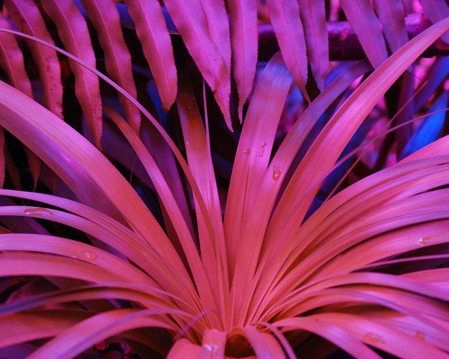 Botanical Photograph - Dew Drop Pink by Florene Welebny