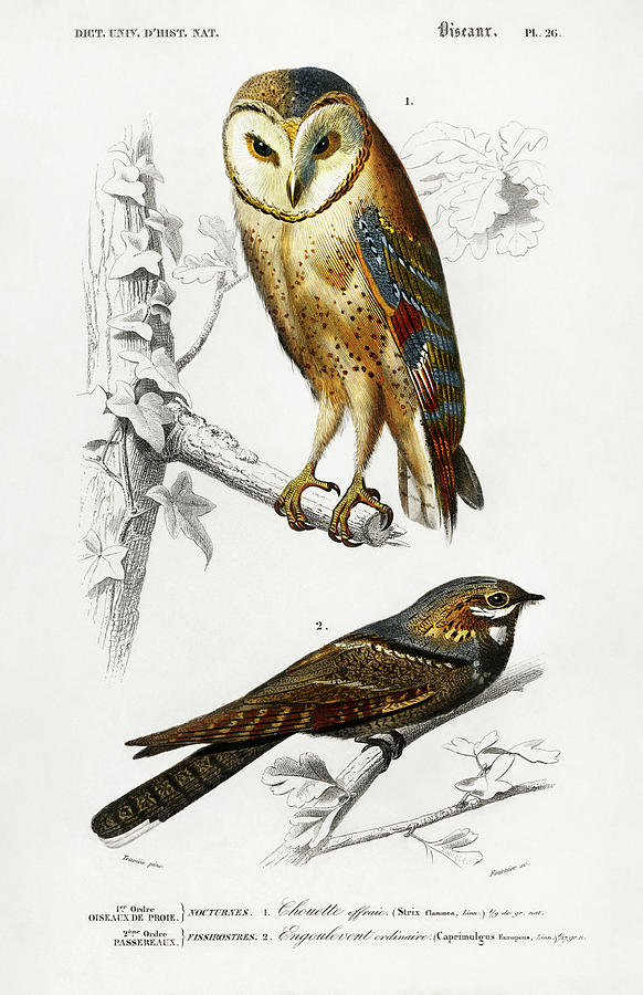 Different Illustrated Types Of Birds 1
