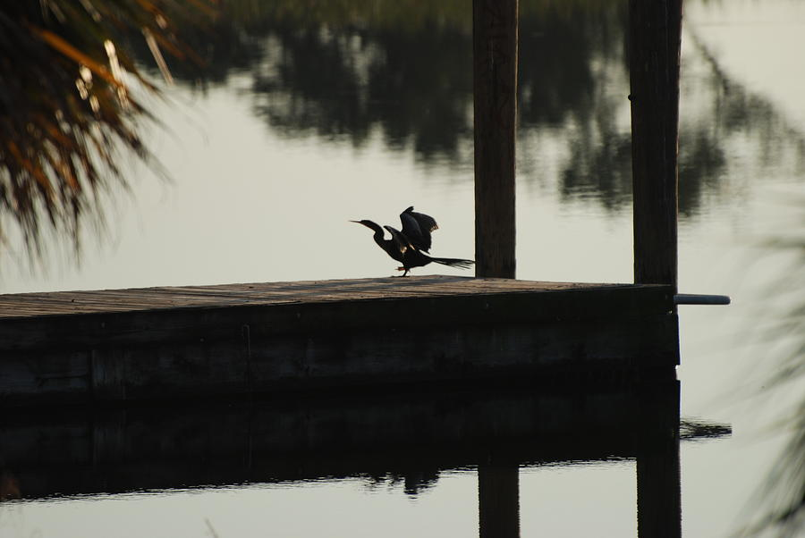 Reflections Photograph - Dock Bird by Rob Hans