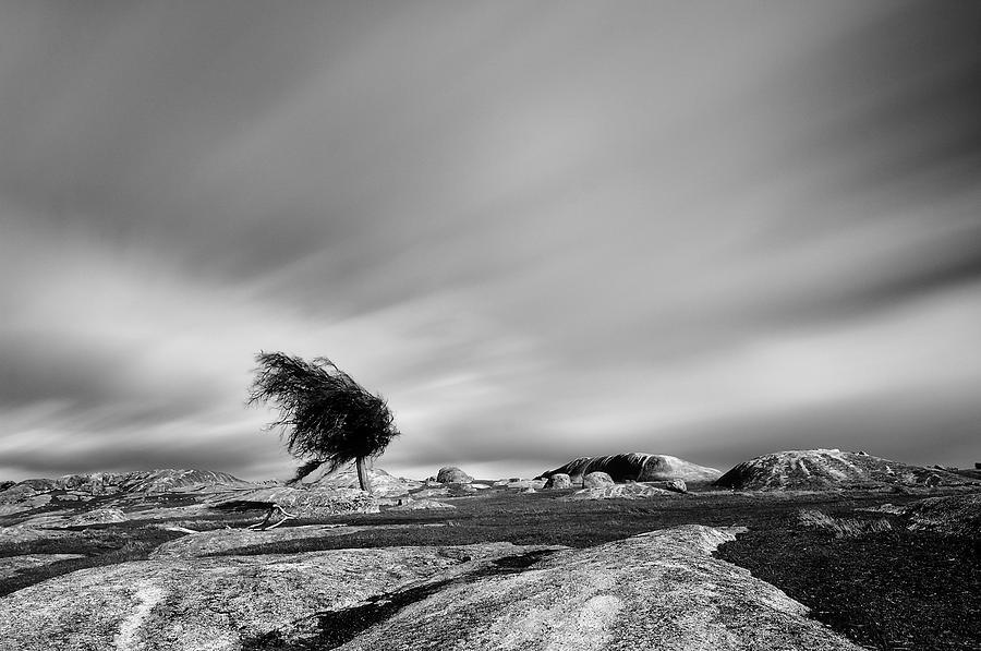 Tree Photograph - Dog Rocks by Mihai Florea