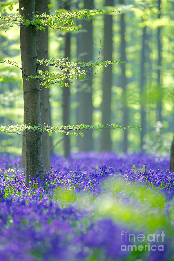 Dream Photograph - Dream forest by Corne Van Oosterhout