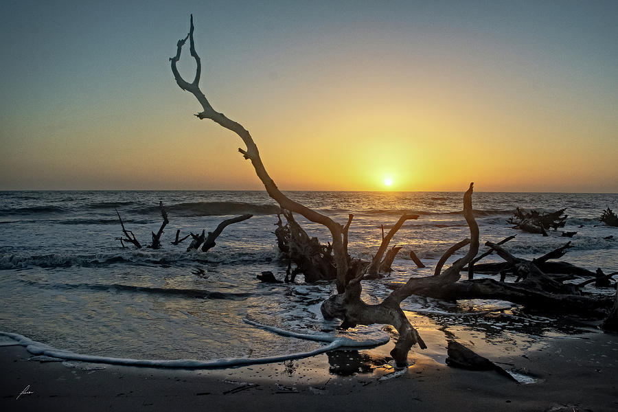 Seascapes Photograph - Driftwood Beach by Patricia Turo