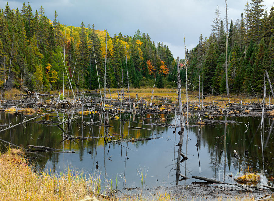Dead Photograph - Drowned Trees by Maxim Images Prints