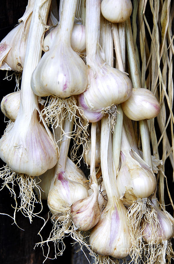 Organic Photograph - Drying Garlic by Thomas R Fletcher