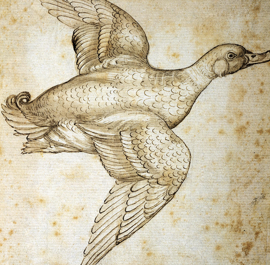 Duck Drawing By Leonardo Da Vinci
