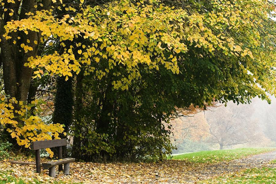 Autumn Photograph - Dun Na Ri Forest Park, County Cavan by Peter McCabe