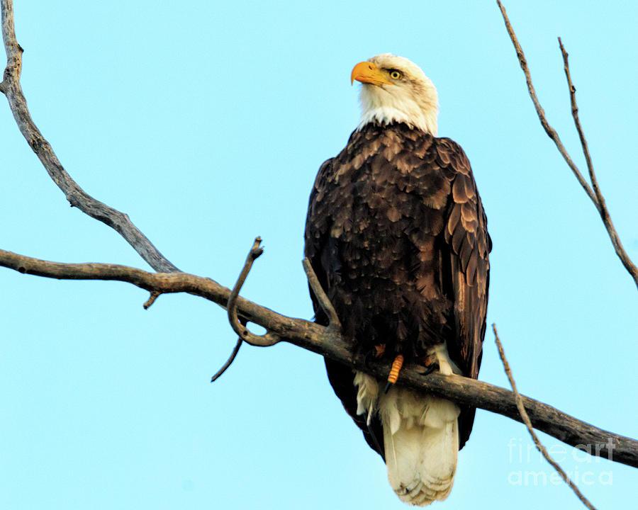 Eagles Photograph - Eagles View by Terri Morris