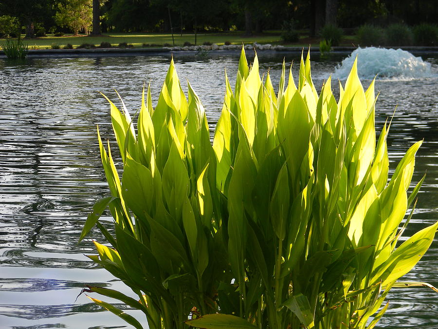 Pond Photograph - Early Light by Warren Thompson