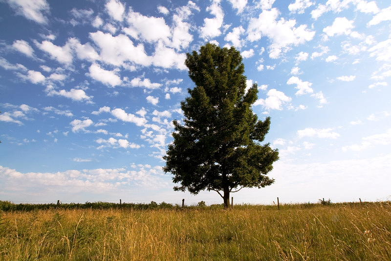 Tree Photograph - Earth And Sky by Amanda Kiplinger