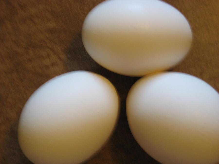 Eggs Photograph by Blake Pereira