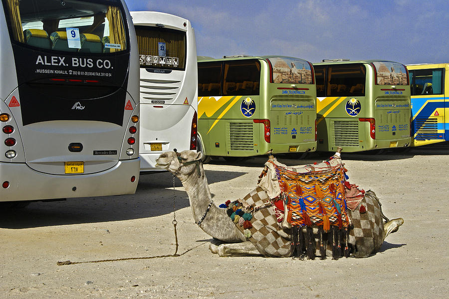 Humor Photograph - Egyptian Parking Lot by Michele Burgess