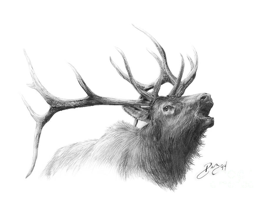 Elk Drawing By Larry DEZ Dismang