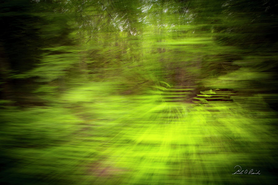Landscape Photograph - Enchanted Forest 4 by Frederic A Reinecke