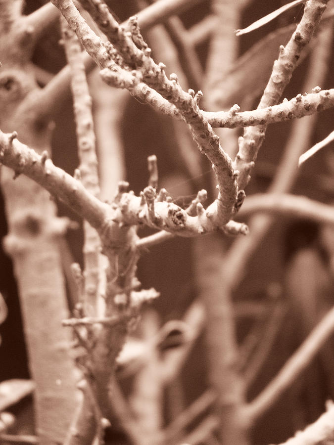 Nature Photograph - Entangled Purposes by Eby Man