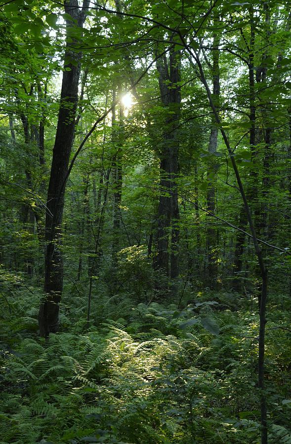 Woods Photograph - Evening Woods by Deborah Hochhauser