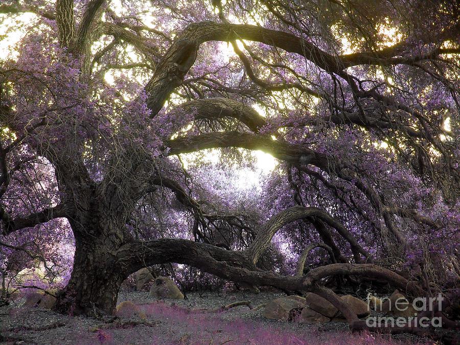 Fairy Tree Photograph - Fairy Tree by Robert Ball