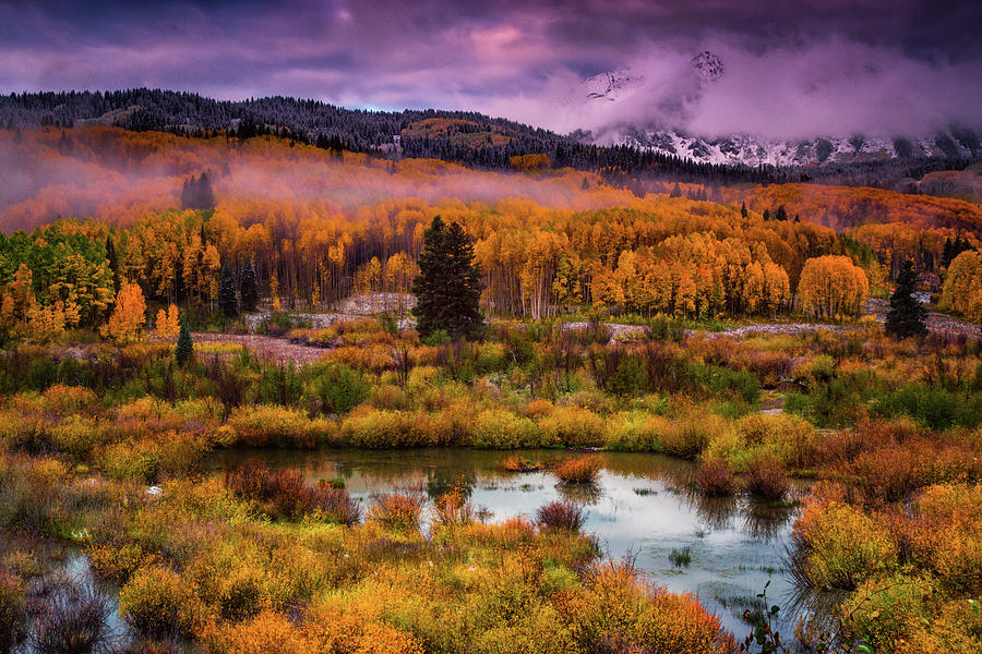 Aspen Photograph - Fall Along Kebler by John De Bord