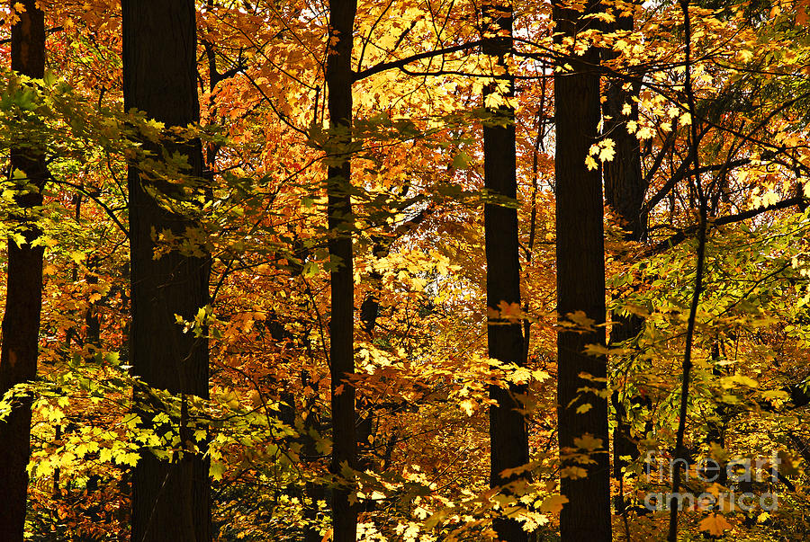 Fall Photograph - Fall Forest by Elena Elisseeva