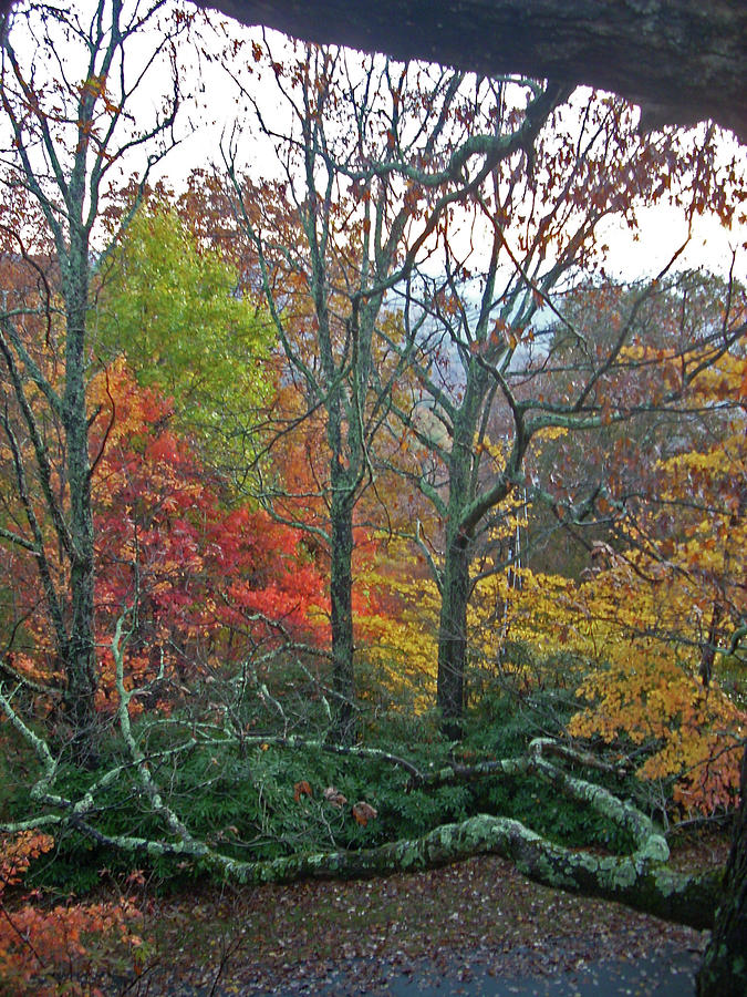 Trees Photograph - Fall in the NC Mountains by Beebe  Barksdale-Bruner