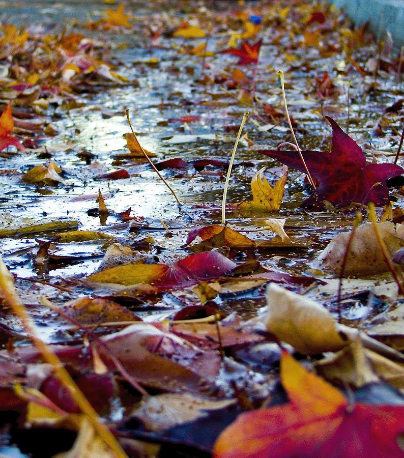 Fall Photograph - Fall by Jason Leonti