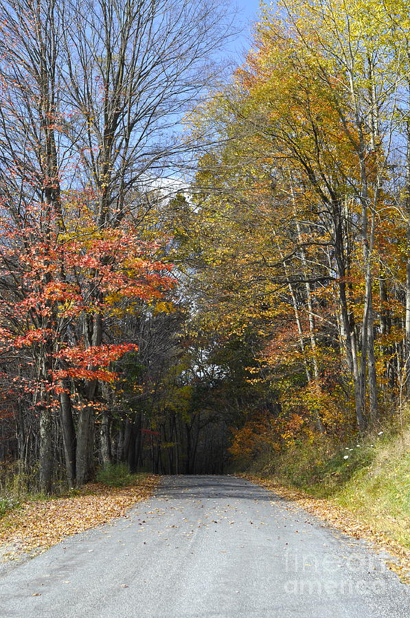 Fall Scene Photograph - Fall Lane by Penny Neimiller