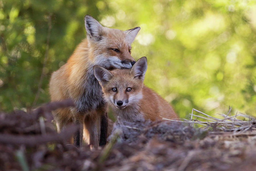 Family portrait by Mircea Costina Photography