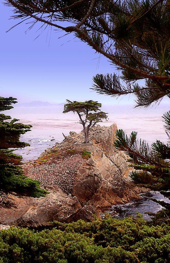 Cypress Photograph - Famous Cypress by Ron Regalado