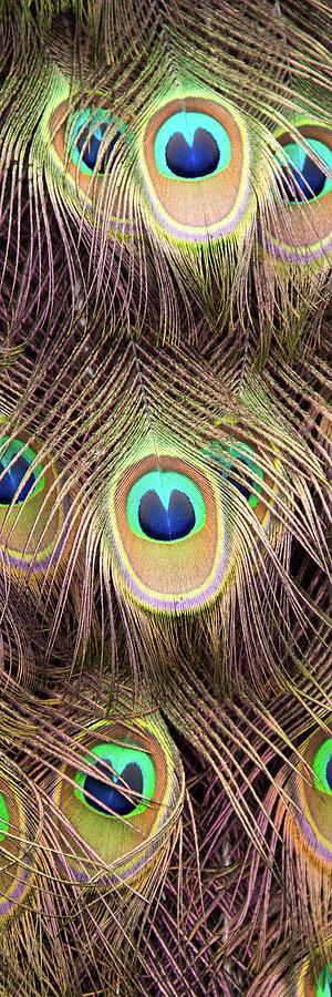 Fan of Feathers by Joye Ardyn Durham