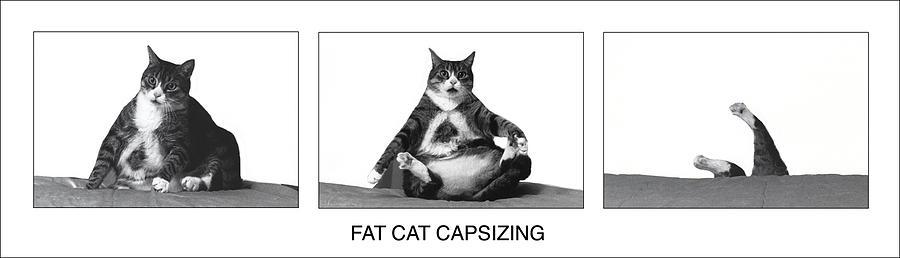 Cats Photograph - Fat Cat Capsizing by Richard Watherwax
