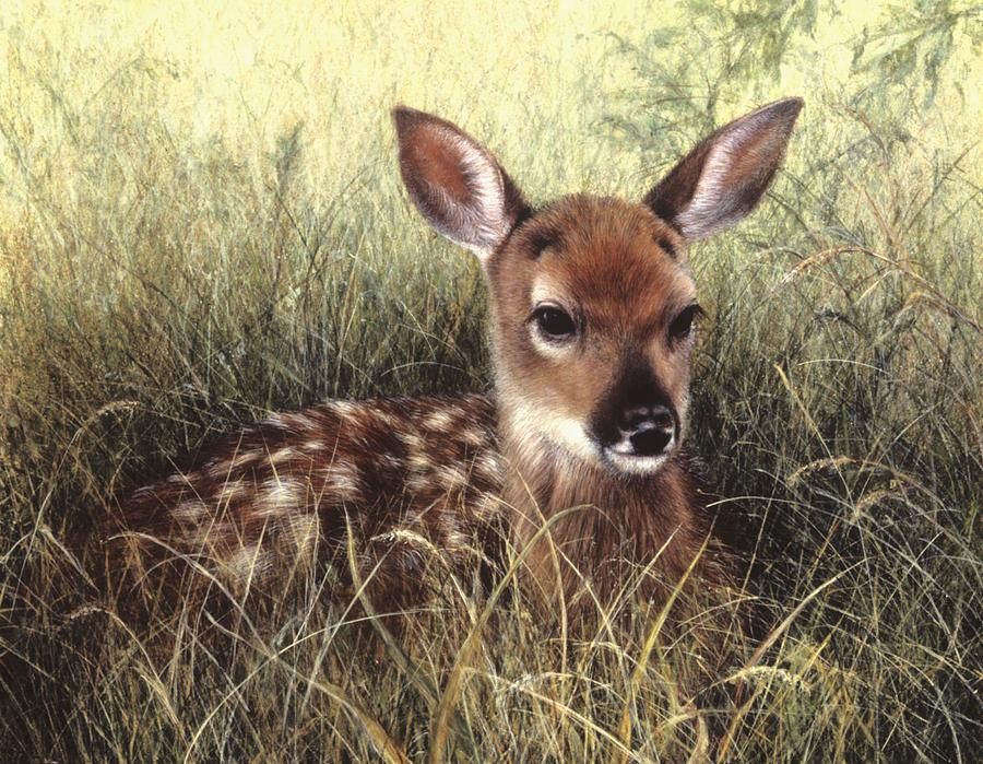 Deer Painting - Fawn by Janet Landrum