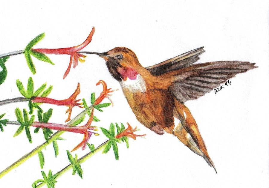 Hummingbird Drawing - Feeding Time by Joanne Dour