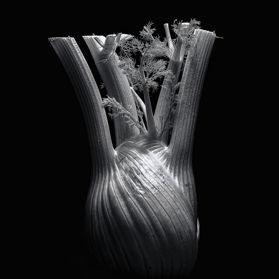 Fennel Photograph - Fennel by Wayne Sherriff