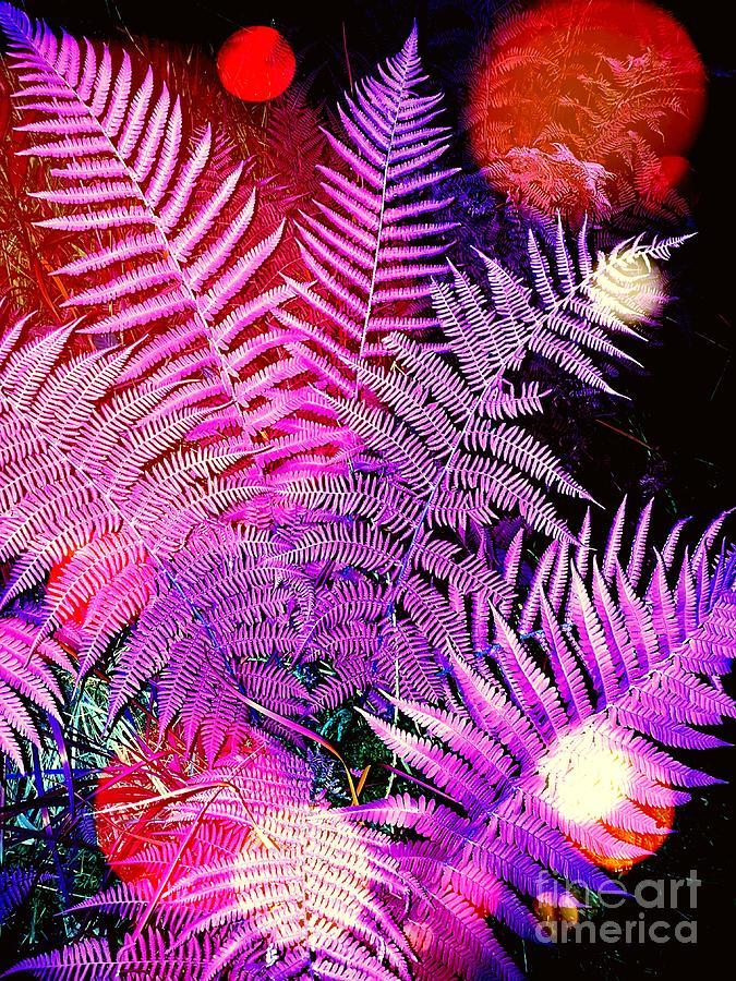 Ferns Photograph -     Ferns by Daniel Janda