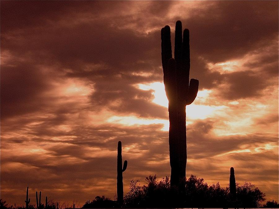 Film Homage Orson Welles Saguaro Cacti The Other Side Of The Wind Carefree Arizona 2004 Photograph by David Lee Guss