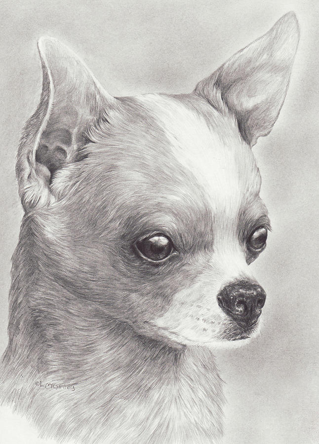 Fine Chihuahua by Laurie McGinley