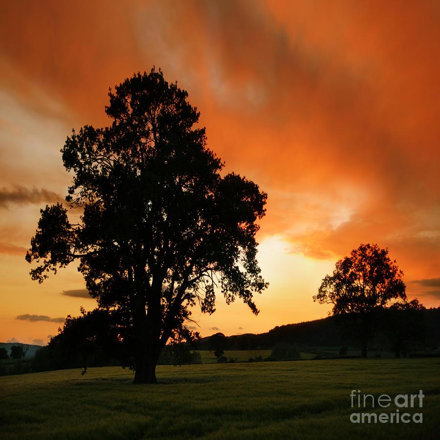 Tree Photograph - Fire On The Sky by Angel  Tarantella