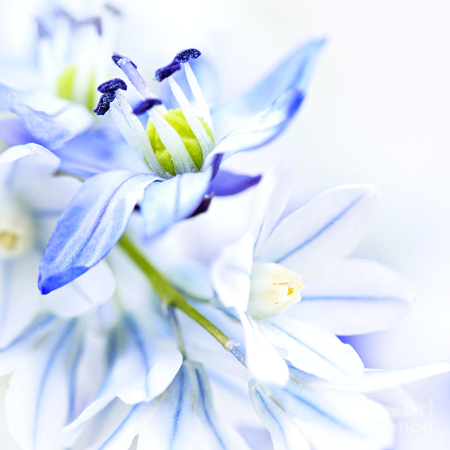 Flower Photograph - First Spring Flowers 1 by Elena Elisseeva