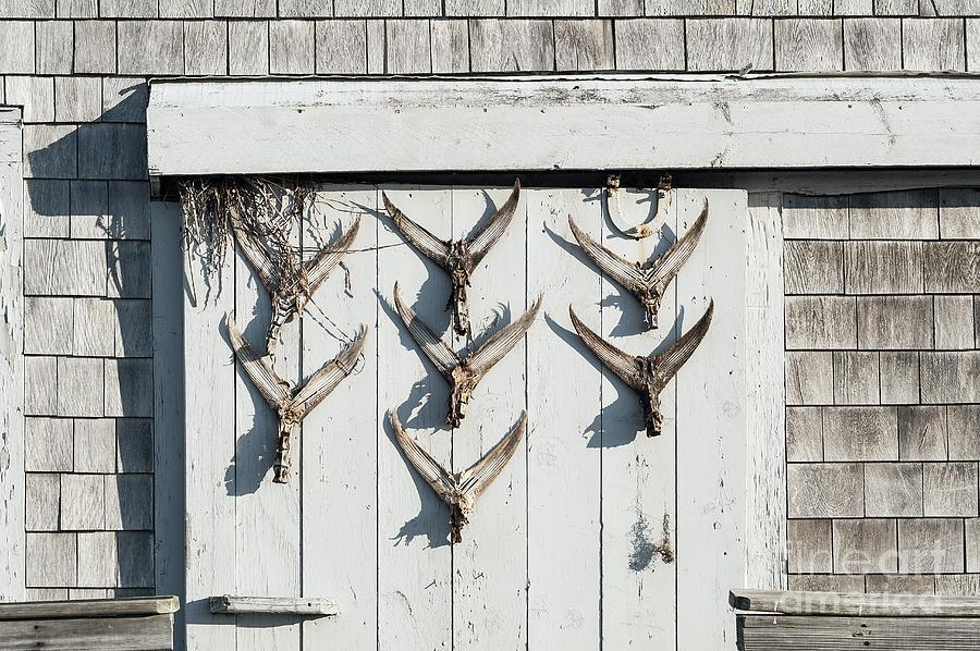 Cape Cod Photograph - Fishing Shack by John Greim