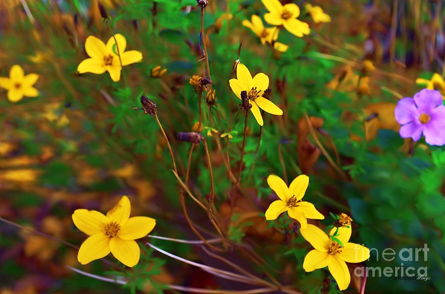 Fleur by Abbie Shores