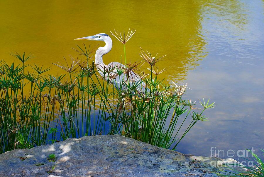 Florida Photograph - Florida Heron by Andrea Simon